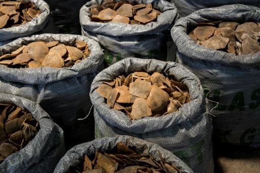 hong kong protection animaux contrebande braconnage