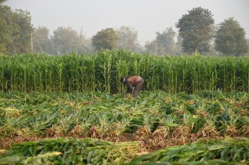 FAO penurie alimentaire biodiversite