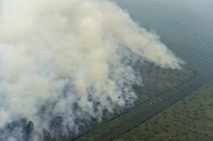 deforestation indoneie amendes
