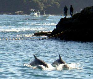 chasse aux duaphins justice japon