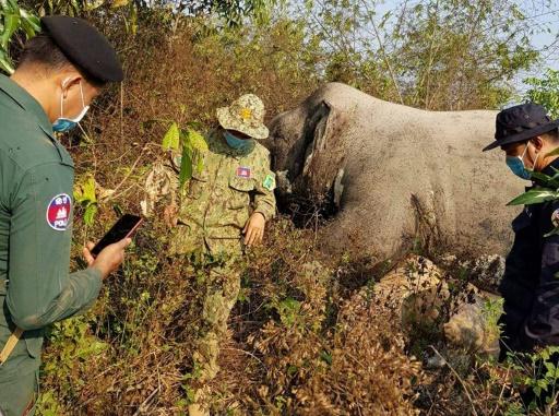 elephants camboge