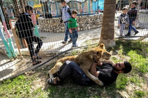 lion sans griffes gaza