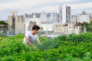 agriculture urbaine rentabilité