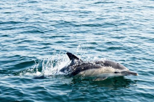 dauphins échoués cote atlantique