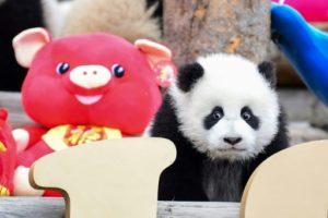 zoo californie panda restitution chine