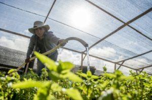 chili agriculture desert plus aride du monde