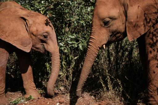 elephants orphelinat
