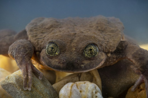 romeo juliette grenouilles