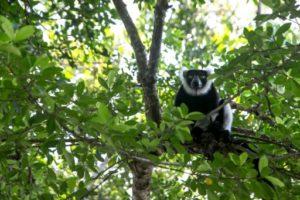lemurien madagascar