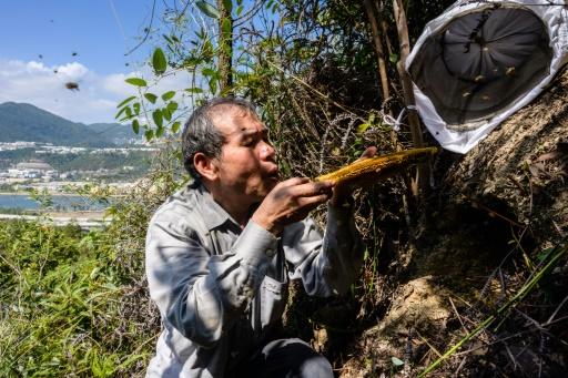 hong kong apiculteur abieilles