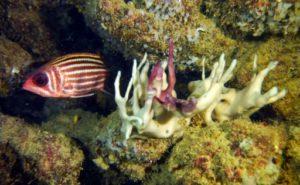 coraux blanchiment