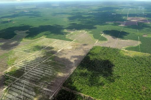 humanite nature destruction