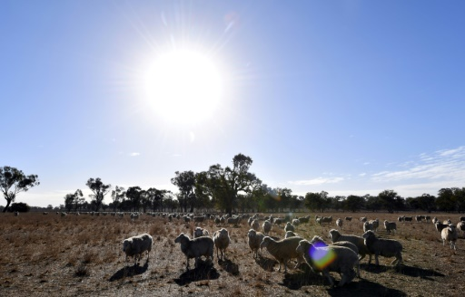 australie record chaleur
