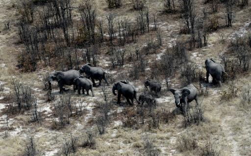 commerce de l'ivoire afrique australe