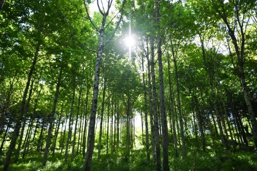 Forêt de Pleyben, propriété d'EcoTree, le 14 mai 2019 © AFP Fred TANNEAU