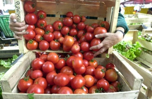 Un cageot de tomates de culture biologique, le 29 septembre 2000, sur un étal d'un marché à Caen © AFP/Archives MYCHELE DANIAU