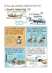 """Extrait de la bande dessinée """"La Guerre des fourmis"""" de Franck Courchamp et Mathieu Ughetti. © Mathieu Ughetti"""
