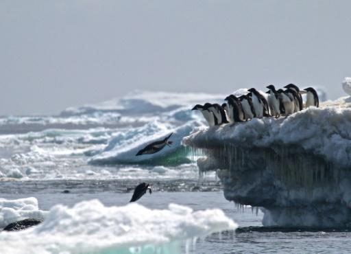 fientes de machnots antarctique