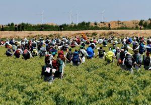 Des militants mènent une action contre une mine de charbon à Garweiler, dans le bassin minier rhénan en Allemagne, le 22 juin 2019 © AFP INA FASSBENDER