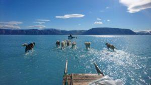 Photo prise le 13 juin 2019 par Steffen Olsen de l'Institut danois de météorologie (DMI) montrant des chiens de traîneau sur la glace fondue de la banquise dans le nord-ouest du Groenland © Centre for Ocean and Ice at the Danish Meteoroligical Institute/AFP Steffen Olsen