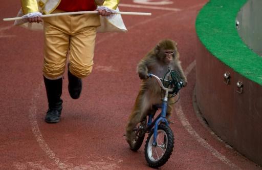 L'association Code Animal lance mardi et jusqu'au 11 juin, une campagne d'affichage dans le métro parisien pour dénoncer l'exploitation des animaux dans les cirques en France © AFP/Archives JOHANNES EISELE