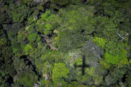 L'Amazonie, au Brésil, le 14 octobre 2014 © AFP RAPHAEL ALVES