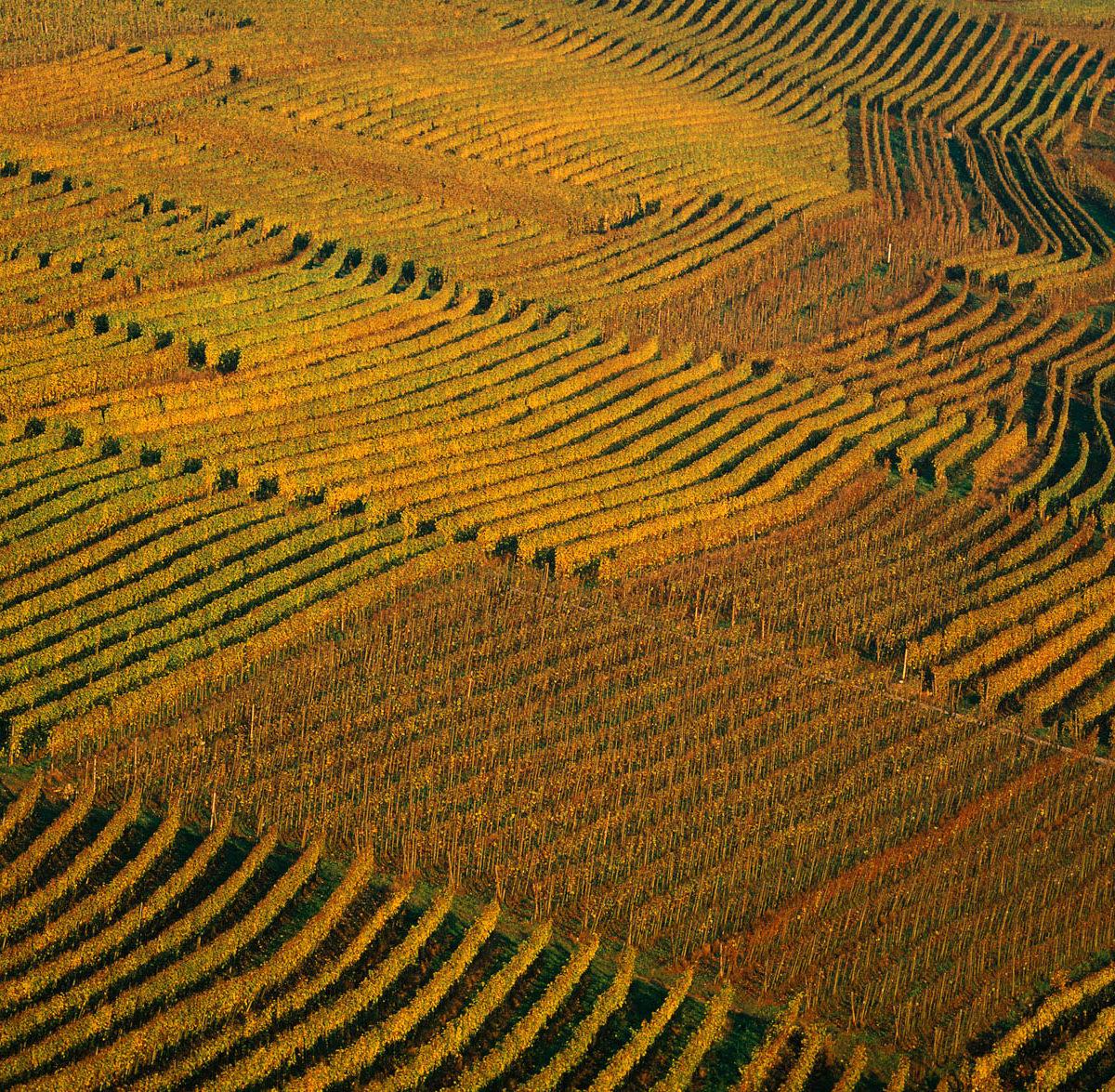 Vignes près de Remich - Luxembourg (49°33' n - 6°22' E) © Yann Arthus Bertrand