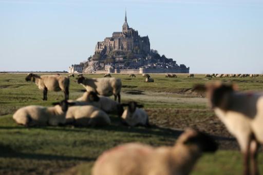 Des moutons de prés-salés devant le Mont-Saint-Michel, en octobre 2015 © AFP/Archives Charly TRIBALLEAU