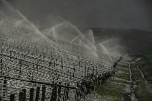 Arrosage de vignoble de Chablis, en avril 2017 © AFP/Archives PHILIPPE DESMAZES