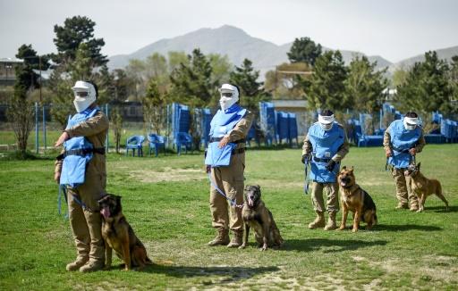 chiens renifleurs afghanistan