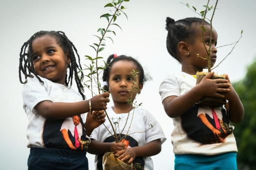 Des fillettes participent à une opération nationale de plantation d'arbes en Ethiopie, à Addis Abeba le 28 juillet 2019 © AFP MICHAEL TEWELDE