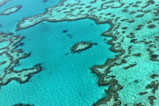 grande barriere corail changement climatique