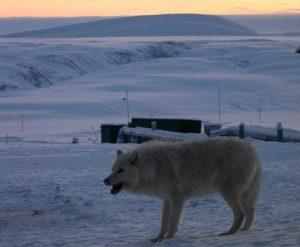record chaleur alaska