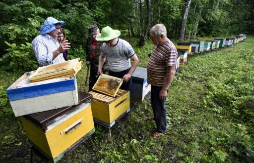 Les apiculteurs russes Anatoli Roubtsov (g) et Viktor Morozov (2e d) près de leurs ruches, le 18 juillet 2019 dans la régio nde Toula, au sud de Moscou © AFP Alexander NEMENOV