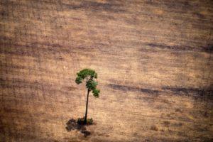 Un arbre isolé dans un secteur déforesté dans l'Etat de Para au nord du Brésil, le 14 octobre 2014 © AFP/Archives RAPHAEL ALVES