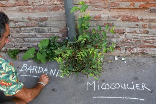 toulouse guerrila garden plantes sauvages