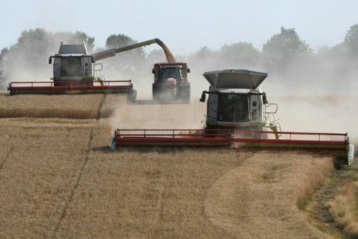 L'agriculture émet environ un quart des émissions de gaz à effet de serre produits par l'activité humaine, selon le rapport du World Resources Institute (WRI) © AFP/Archives Jean-Francois MONIER