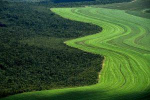 Vue aérienne de champs cultivés à la lisière de la savane Cerrado, le 14 juin 2019 à Formosa do Rio Preto, au Brésil © AFP/Archives NELSON ALMEIDA