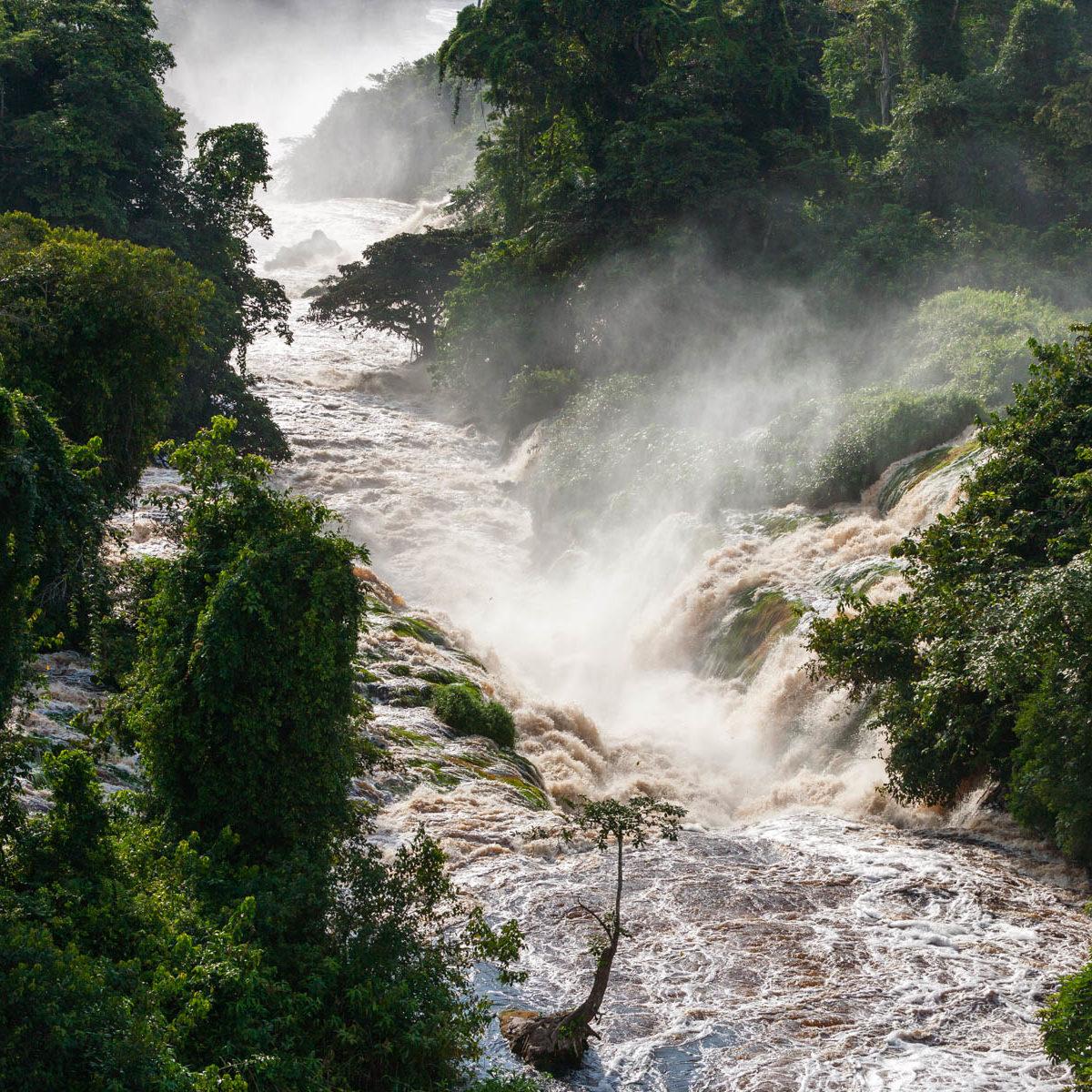 Parc national de l'Ivindo, province de l'Ogooué-Ivindo, Gabon. (0°52' N - 13°10' E)