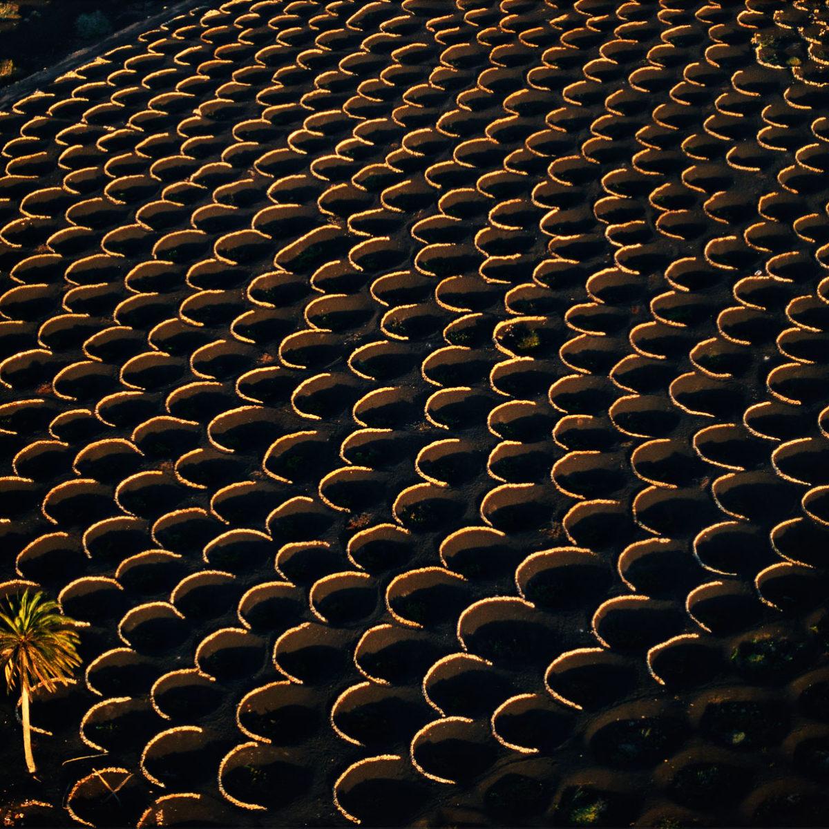 Vineyards, La Geria region, Lanzarote, Canary Islands, Spain (28°58' N – 13°43' W).