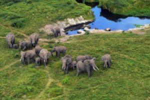 elephants cites zoos