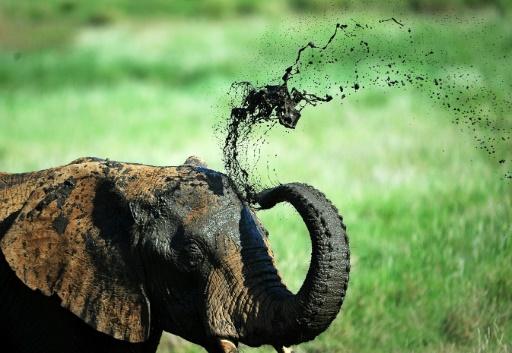cites éléphants zoo