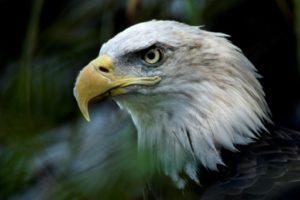 politique environnemental de trump