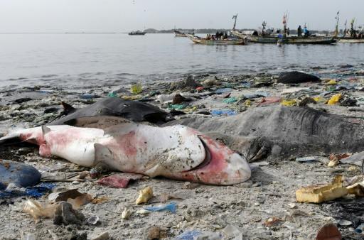 protection des océans