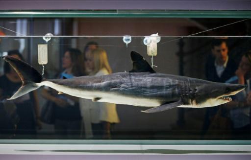 requins mako cites