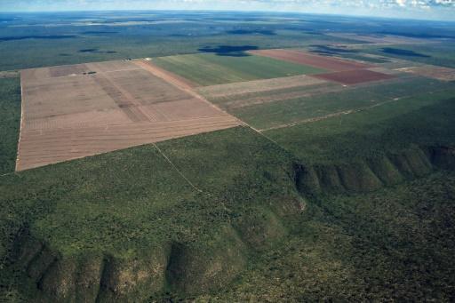 Vue aérienne de la savane Cerrado grignotée par des champs cultivés, le 29 mai 2019 à Formosa de Rio Preto, dans l'Etat de Bahia, au Brésil © AFP/Archives NELSON ALMEIDA