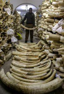 afrique australe ivoire