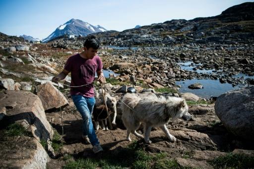 groenland chiens de trainau fonte des glaces