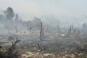 incendie indonésie
