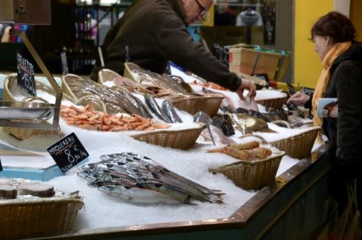 poisson alimentation